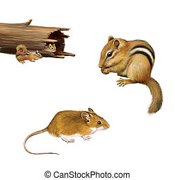 Rodents: chipmunk eating a nut, yellow brown mouse, two...