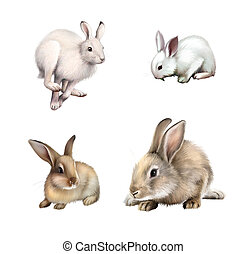 White Rabbit sitting, White hare running away. Gray rabbit....