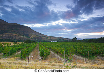 Wine farm, StellenboschSouth Africa - Stellenbosch is the...