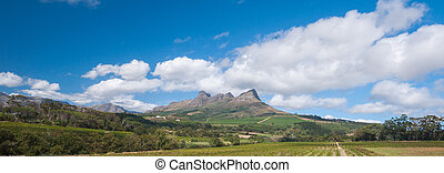 The Stellenbosch wine lands region near Cape Town -...