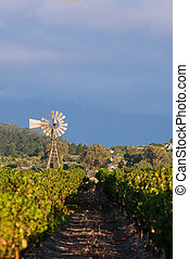 The Stellenbosch wine lands region near Cape Town - vineyard...