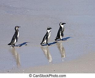 Three Penguins On The Beach