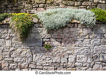 Medieval wall covered with plants