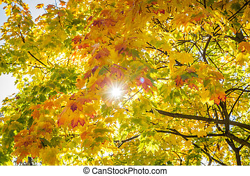 Sun beam through autumn leaves background
