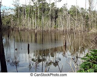 Lago - Lago na zona rural da Praia do Espelho...