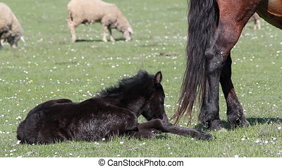 black foal on pasture