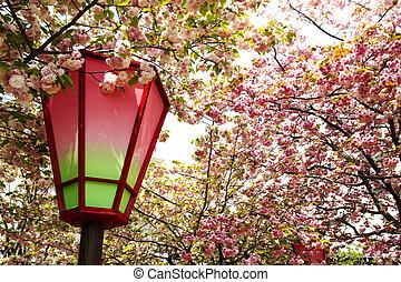 japón, menta, Cereza, flor, estación