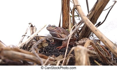 frog in early spring
