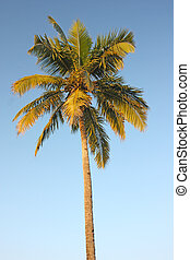 coconut palm tree against bright blue tropical sky
