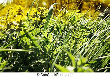 Grass in spring meadow