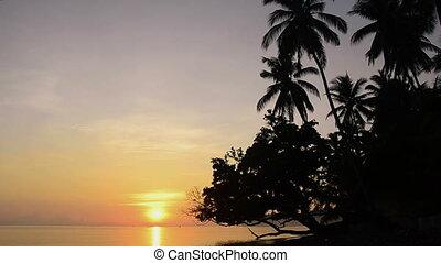 sunrise over ocean under palms