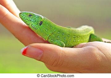 verde, lagarto, mujeres, Palma