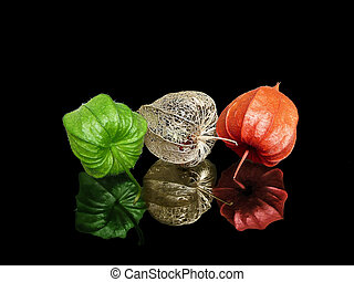 Green, Red, Dry Lampions