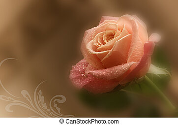 romantic background with delicate pink rose (close-up)