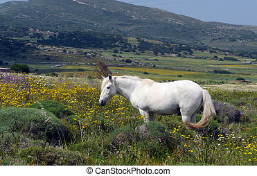 White Horse in the field - White Horse in the spring flower...