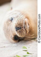 Sea Lion - Close up portrait of a sea lion at beach