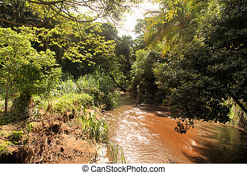Muddy River Running Through Tropical Forest - Picture of...