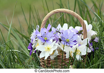Basket of wild spring flowers