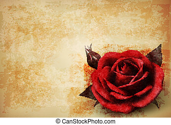 Retro background with beautiful red rose with buds. Vector illustration.