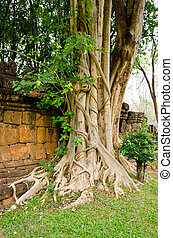 An interesting tree root, Kanchanaburi in Thailand