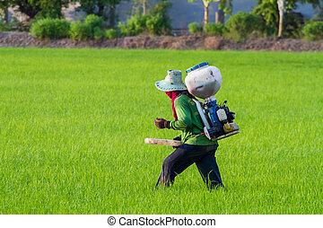 granjeros, siembra, fertilizante