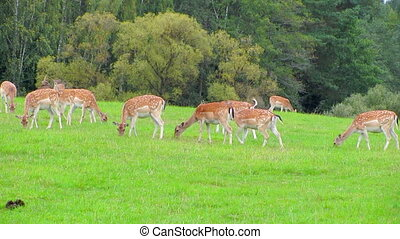 young reindeer in a pasture