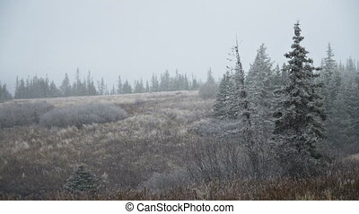 Light Snowfall Over Alaskan Ravine - Winter's first snowfall...