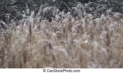 Falling Snow on Grasses Pan Slowmo - Slow motion pan shot...