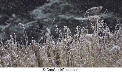 Slow Motion Falling Snow Dead Grass - Shot at a high frame...