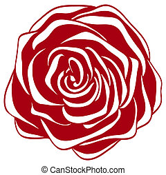abstract red and white rose.