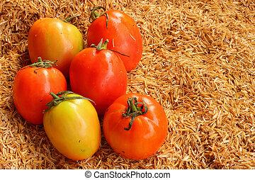 蔬菜, 新鮮,  -tomato