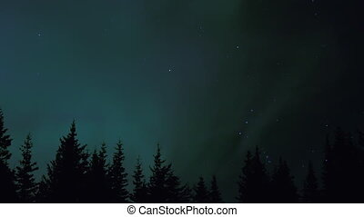 Northern Lights Aurora Trees Orion - The constellation Orion...