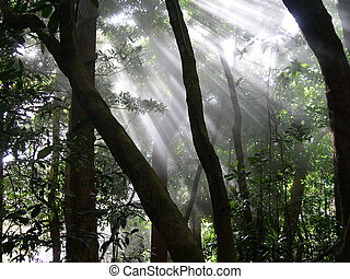 Foggy forest in Costa Rica