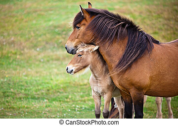 Brown Horse and Her Foal in a Green Field of Grass....