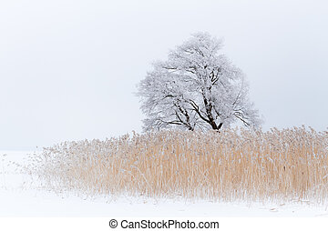 Lonely tree on the snow-covered lake