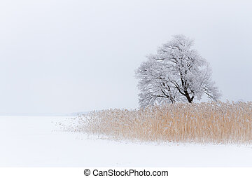 Lonely tree on the snow-covered lake at winter