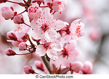pink blossom on tree