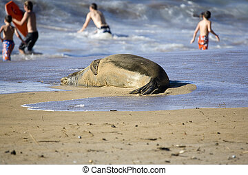 Monk Seal and Children on Beach