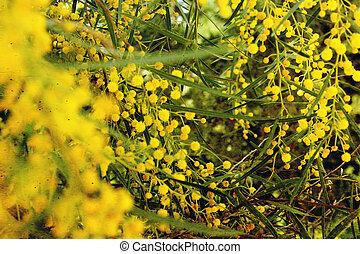 Yellow flowers, vintage look