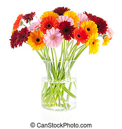 Bouquet Gerber flowers in glass vase isolated over white...