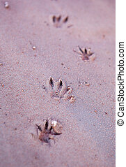 Animal tracks - Small animal prints in the red sands along...