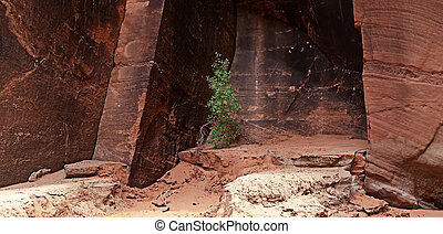 Canyon Walls - Sandstone canyon wall in Buckskin Gulch, Utah