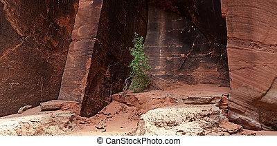 Canyon Walls - Sandstone canyon wall in Buckskin Gulch, Utah