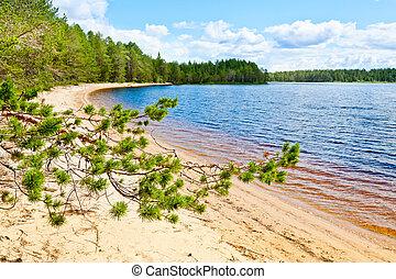 pino, foresta, lago, contro, ramo