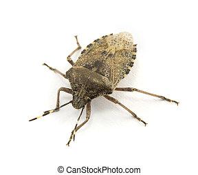 bug isolated isolated on white background