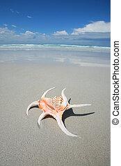 Shell on a tropical beach