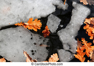 melted ice with yellow leaves