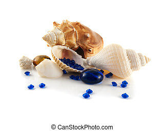 Sea shells isolated on white background (collection). With...