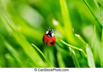 Lady bug - lady bug on grass