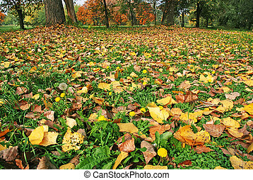 Autumn ground - autumn yellow leaves on green grass among...